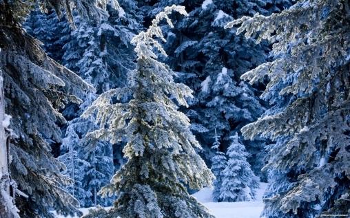 Зимние салки-ёлочки