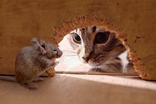 Кот и мышонок