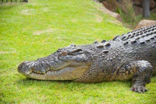 Детская игра Крокодил