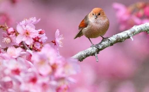 Цветочки и птички