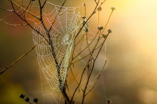 Полоса препятствий - паучья клетка
