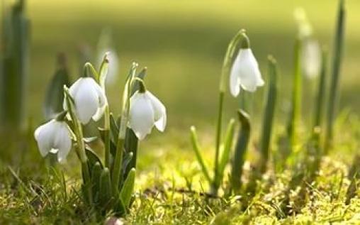 """Интеллектуальная игра """"Весна красна"""""""