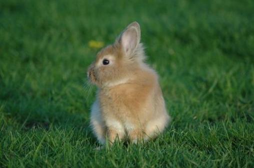 Не ходите, зайцы, в огород!