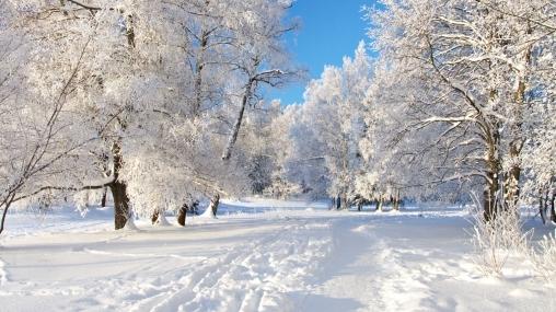 Загадки про зиму для малышей